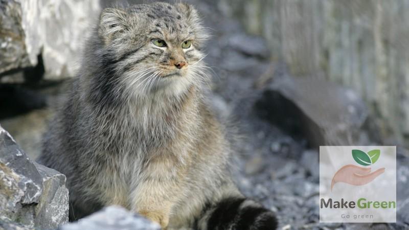 Монгол орны ховор амьтад - МАНУУЛ