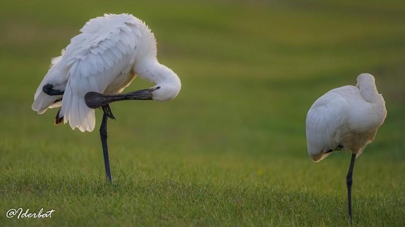 Монгол орны шувууд #3