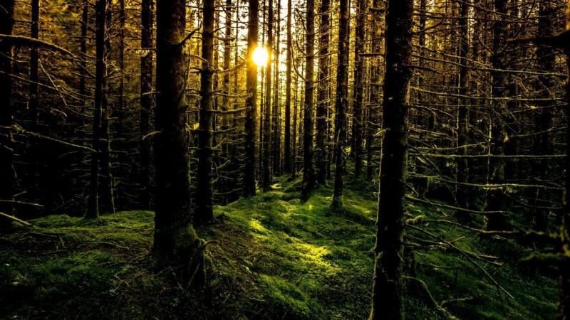 Мод бүрийг тоолохуй: Норвегичуудын ойгоо аварсан нууц
