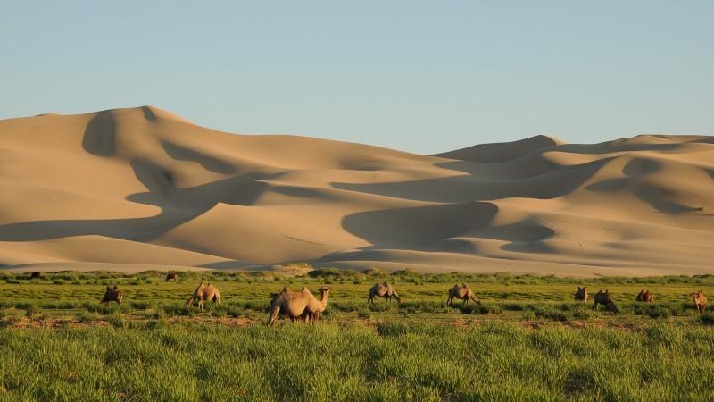 Монголын үзэсгэлэнт газрууд - Хонгорын элс
