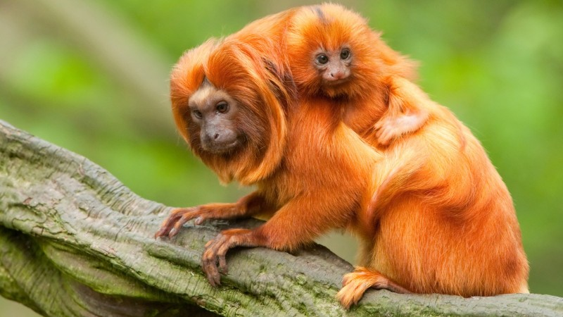 Эрдэмтдийн ачаар мөхлөөс аврагдсан 10 амьтан