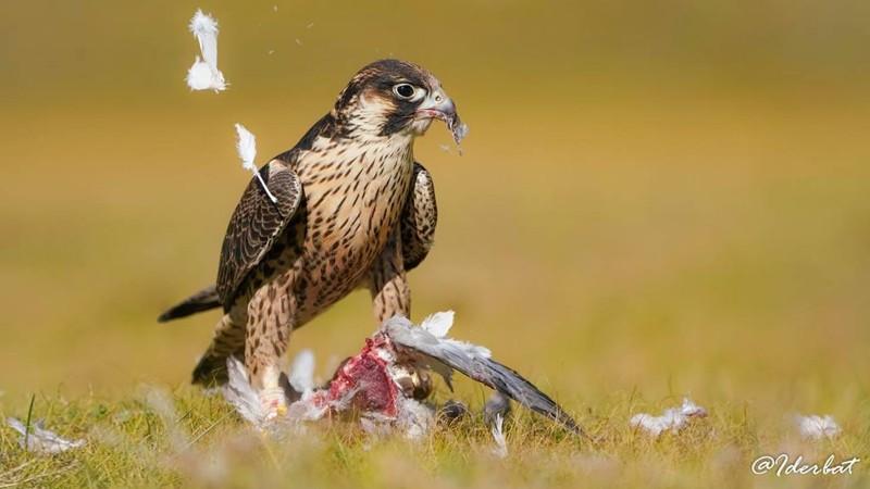 Монгол орны шувууд #5