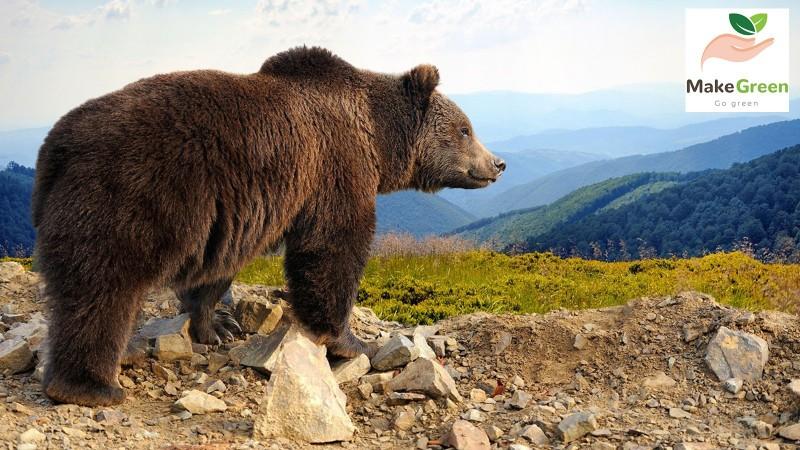 Монгол орны ховор амьтад - ХҮРЭН БААВГАЙ