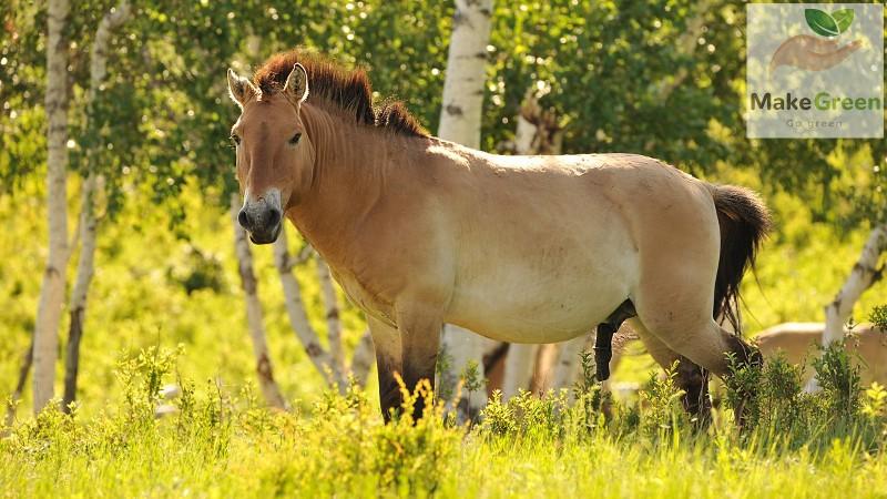 Монгол орны ховор амьтад - ТАХЬ