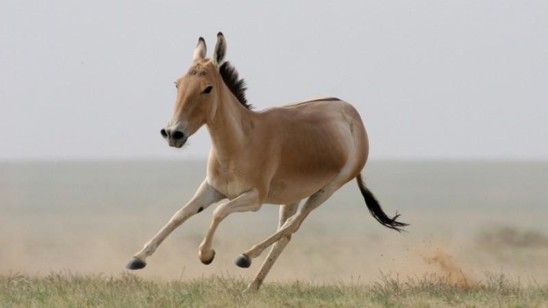 Монгол орны ховор амьтад - ХУЛАН