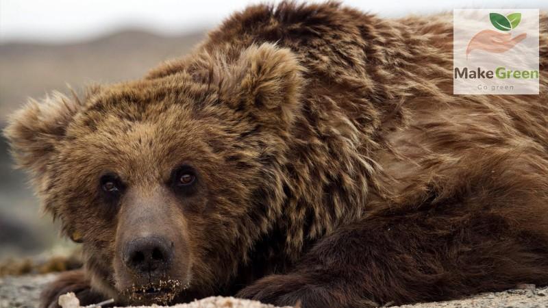 Монгол орны ховор амьтад - МАЗААЛАЙ