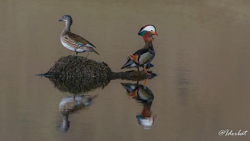 Монгол орны шувууд #1