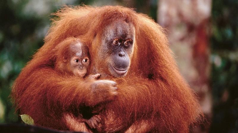Амьтны ертөнцийн 10 гайхалтай (ганц бие) ээж