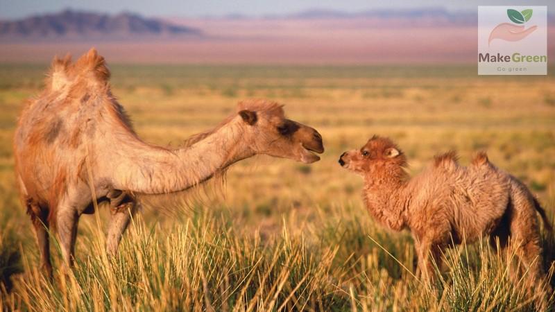 Монгол орны ховор амьтад - ХАВТГАЙ