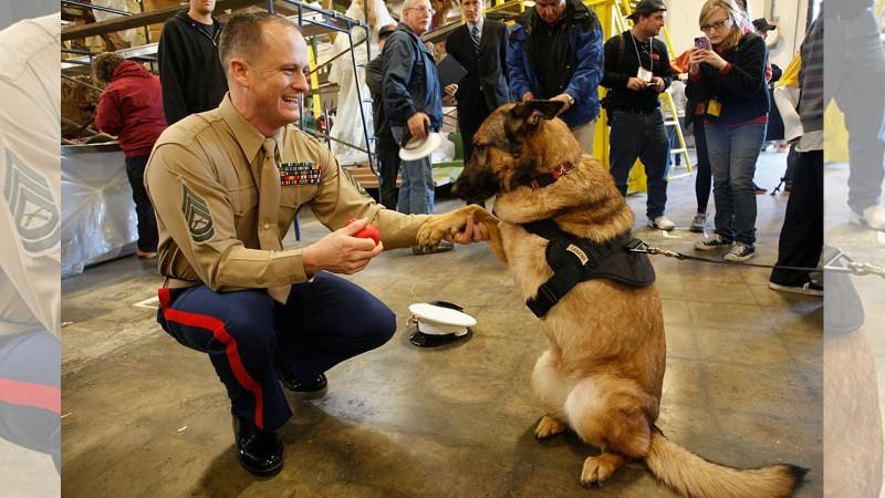 Гэмт хэрэг илрүүлсэн 10 баатарлаг нохойн түүх