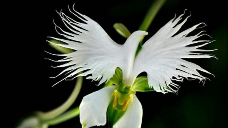 Өвөрмөц содон 10 цэцэг